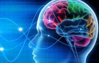 2-Minute Neuroscience: Opioids